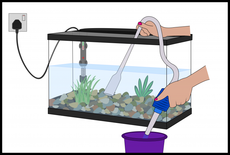 how to clean fish tank gravel