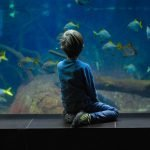 Ultimate Guide to Cleaning an Aquarium